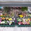 Что нужно чтобы открыть цветочный магазин