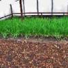 Зеленый лук — бизнес круглый год