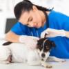 Ветеринар: преимущества и недостатки профессии
