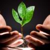 Инвестиции в малый бизнес: преимущества и недостатки