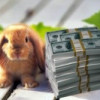 Выращивание кроликов бизнес с нуля