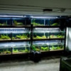 Разведение раков в аквариуме как бизнес